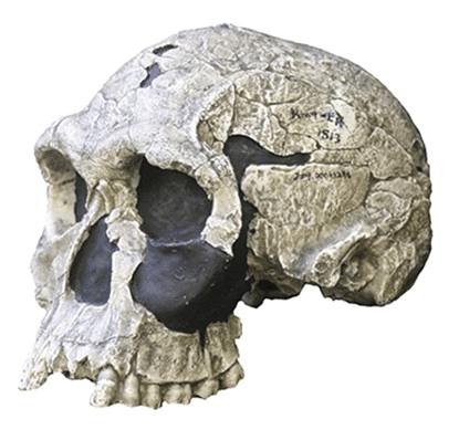 First Earth Explorer: Homo Habilis