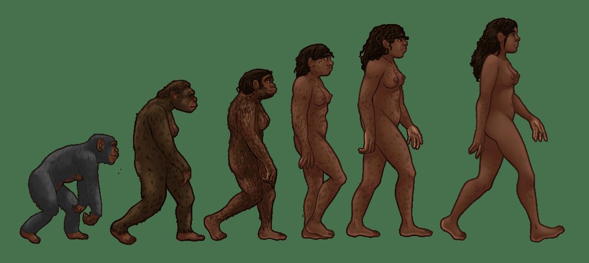 The female human evolution.