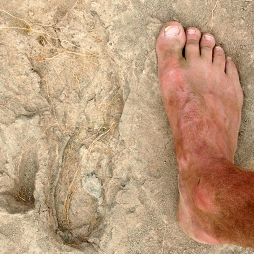 Oldest Modern Human-like Footprints